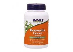 Boswellia 250 mg ekstrakt z Kurkumą (120 kaps.)