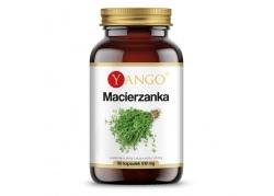 Macierzanka ekstrakt 420 mg (90 kaps.)
