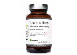 Agaricus blazei - Pieczarka brazylijska (60 kaps.)